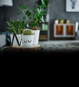 घर को ताज़गी से भर देंगे ये 6 Indoor Plants