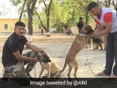 46 Police Dogs, Their Handlers Transferred In Madhya Pradesh