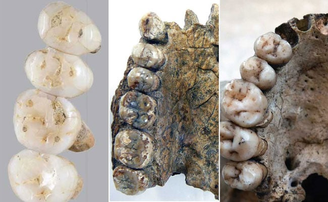 New Species Of Ancient Human Discovered In Philippines