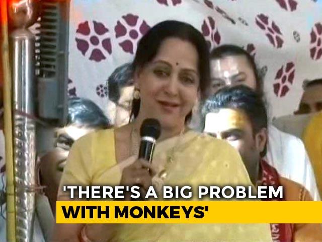 """Video : For Hema Malini, """"Frooti, Samosa"""" Villain In Mathura's Monkey Problem"""