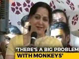 "Video : For Hema Malini, ""Frooti, Samosa"" Villain In Mathura's Monkey Problem"