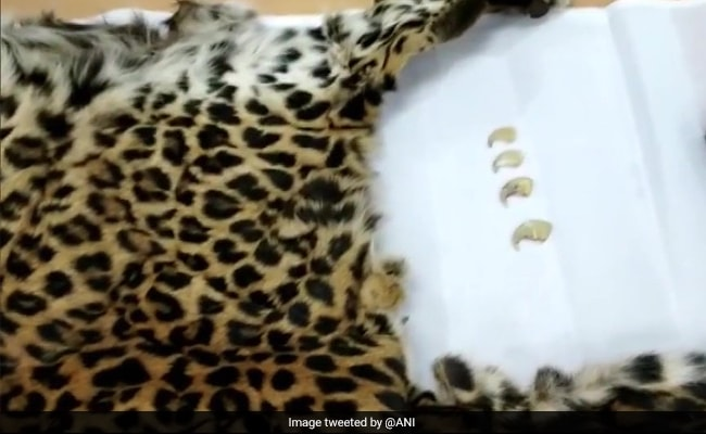 Skin Of Poached Leopard Seized, Four Arrested In Hyderabad