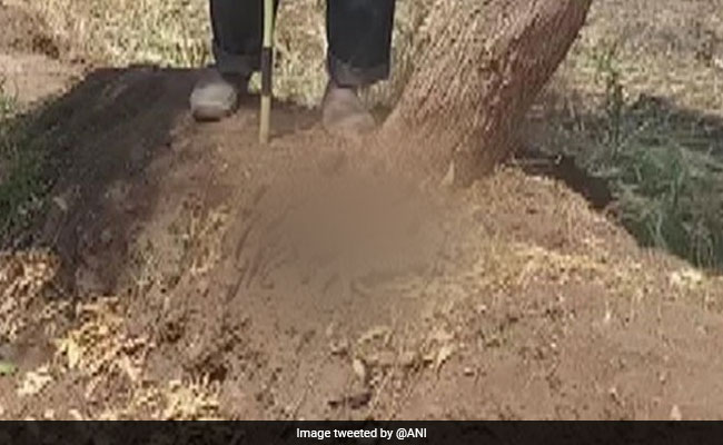 Bodies Of 5 Leopard Cubs, Burnt To Death, Found In Field In Pune District