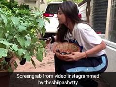 शिल्पा शेट्टी ने घर में उगाए बैंगन और मिर्च तो ये बॉलीवुड एक्टर बोला, 'आधा किलो भिंडी मिलेगी क्या' - देखें Video