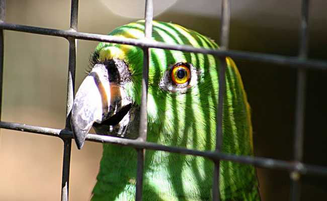 'Mom, Police', Yelled Parrot As Cops Chased Drug Dealers. Now In Custody