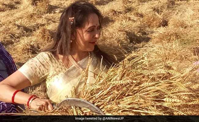 खेत में चुनावी स्टंट करती दिखीं हेमा मालिनी, सजधज के काट रही थीं फसल, देखें तस्वीरें