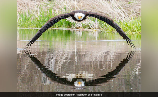 'Stunning' Perfectly Symmetrical Pic Of Eagle And Its Reflection Is Viral