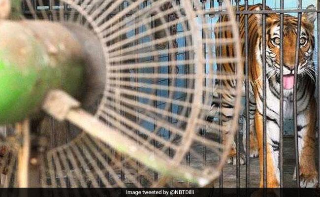 दिल्ली के चिड़ियाघर वालों को ही नहीं पता कि उनके पास कितने जानवर हैं... पुलिस प्रोटेक्शन में होगी जनगणना