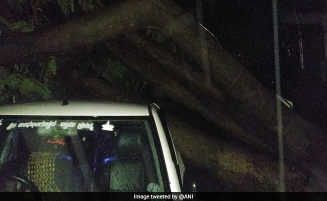 Heavy Rain Uproot Trees In Bengaluru, Minister Monitoring Situation