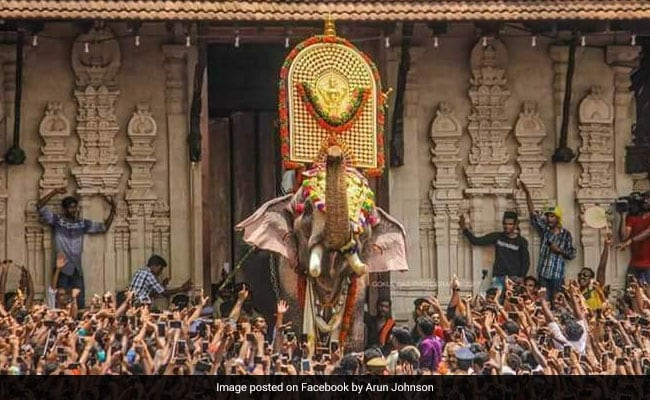 One-Eyed Celebrity Elephant Flags Off Thrissur Temple Festival After Row