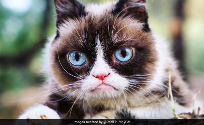 Internet Star Grumpy Cat Dies, Owners Say 'Unimaginably Heartbroken'