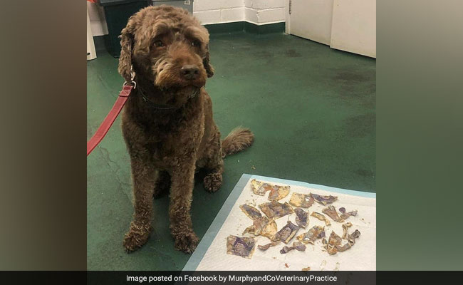 The Dog Ate My Money: Pet Pooch Chews Up Cash Worth Rs 15,000