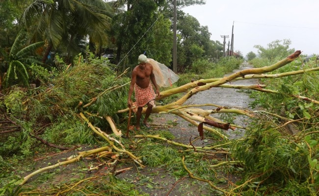 Cyclone Fani Uprooted Over 1 Million Trees In Bhubaneswar