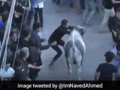 Stray Bull Runs Amok In Lucknow Shia Procession, 12 Injured