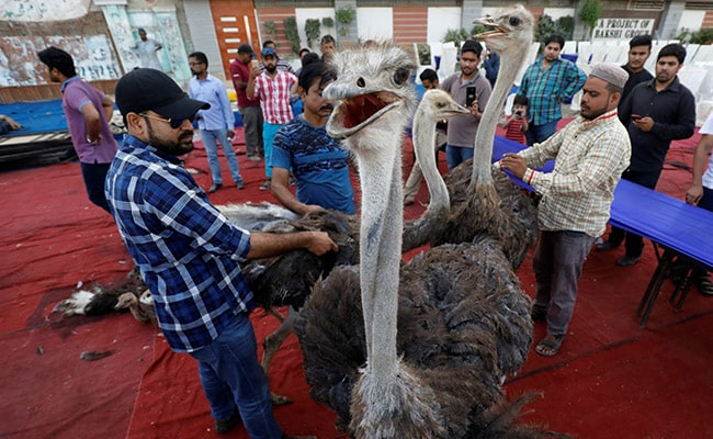 Pakistani Charity Dishes Out Ostrich As Ramadan Treat For Poor