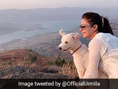 "Urmila Matondkar Stars In ""Radar"" Taunt At PM Modi With ""Pet Romeo"""