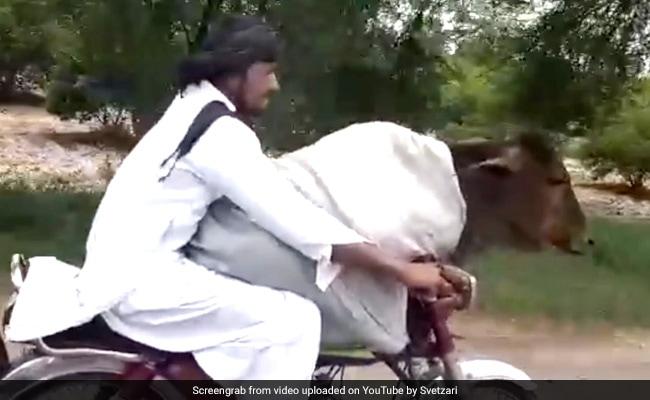 पाकिस्तान में शख्स ने गाय को बिठाया बाइक पर, ऐसे फर्राटेदार दौड़ाई गाड़ी, देखें VIDEO