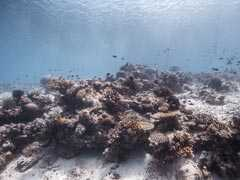 Stricter New Australia Law Aims To Help Save Great Barrier Reef