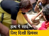 Video : रायबरेली: संपेरों की बस्ती में हाथ में सांप लिए दिखीं प्रियंका गांधी