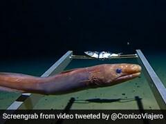 दुनिया की सबसे गहरी समुद्री सतह का Video, दिखाया प्रशांत महासागर के 11Km नीचे का हाल
