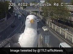 ट्रैफिक कैमरे में फोटो क्लिक कराने आ गए पक्षी, वायरल हो रहा है ये मजेदार वीडियो