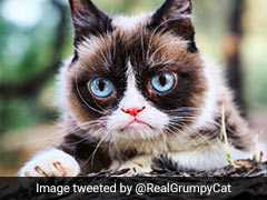"Internet Star Grumpy Cat Dies, Owners Say ""Unimaginably Heartbroken"""