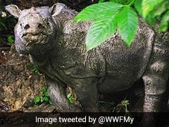 Malaysia's Last Male Sumatran Rhino Dies, Fewer Than 80 Left In World