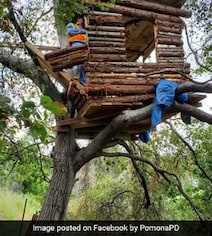 Burglary Suspect Found Living In A Treehouse With Fire Pit And Barbecue