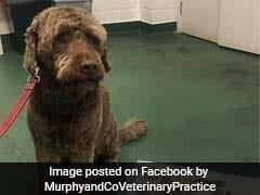 कुत्ते और गीले नोटों की Photo Viral, फेसबुक पर मालिक बोला - महंगा पड़ गया ये दिन