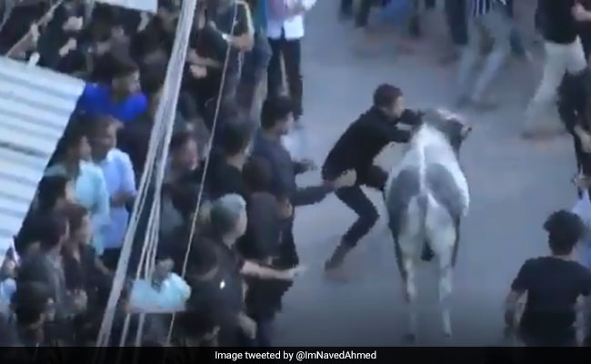 Stray Bull Runs Amok In Lucknow Shia Procession, 12 Injured