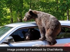 Family Of Bears Take Over Man's Car And The Pics Are Hilarious