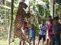 Villagers In Assam Kill Leopard, Gouge Its Eyes Out, Chop Off Paws