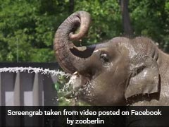 Watch: Zoo Animals Share Techniques To Keep Cool In Heatwave