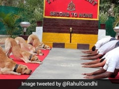 """New India"" Tweets Rahul Gandhi With Dog Squad Yoga Pic, Amit Shah Hits Back"