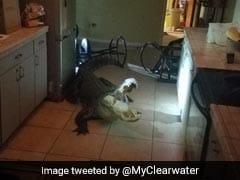 11-Foot Alligator Breaks Into Home Through Window