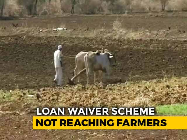 Video : How Bad Is Maharashtra Farmer Crisis? 8 Suicides Every Day For 4 Years