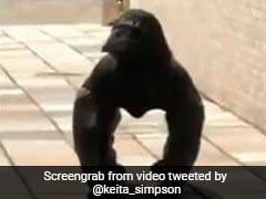 Crow Or Gorilla? Bizarre Video Has Netizens Confused