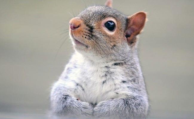 US Cops Seize 'Attack' Squirrel High On Meth During Drug Raid
