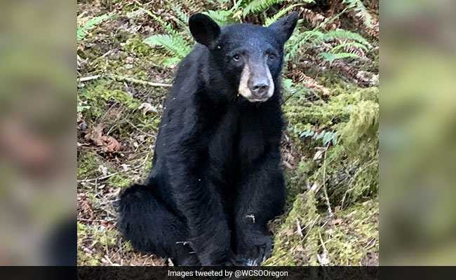 People Ignored Rules To Take Selfies With Bear. Officials Shot Him Dead