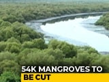 Video : Thousands Of Mangroves To Be Affected By Bullet Train Project