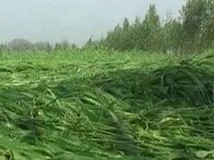प्रधानमंत्री फसल बीमा योजना में किसानों पर नहीं पड़ा रहा प्रीमियम का बोझ