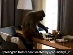 """""""Thug Life,"""" Says Soundarya Sharma For Monkey That Entered Her Room"""