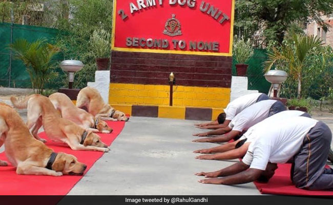Army Spent Rs 1.24 Crore On Its Dog Squad In 2018-19: Centre
