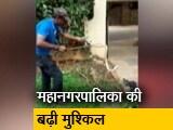 Video : बेंगलुरू में सांपों का आतंक, पकड़े गए सांपों में किंग कोबरा और वाईपर भी