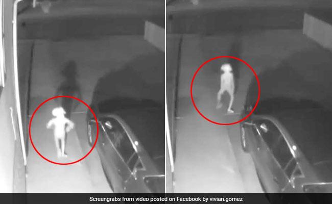 महिला को CCTV में दिखा अजीबोगरीब प्राणी, 3 करोड़ बार देखा गया VIDEO