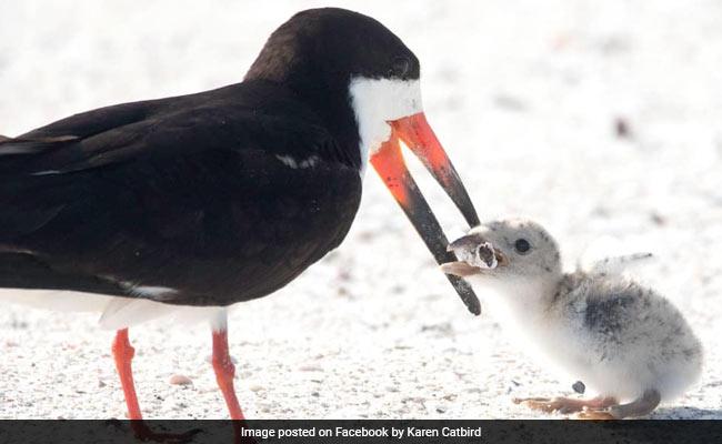 Heartbreaking Pics Show Bird Feeding Cigarette To Baby Chick