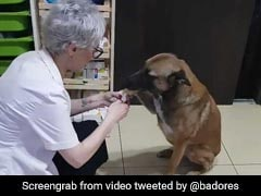Injured Stray Dog Enters Pharmacy For Help. Viral Video Melts Hearts