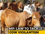Video : Madhya Pradesh Proposes Up To 5-Year Jail For Cow Vigilantism