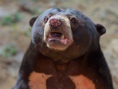 चिड़ियाघर में भालू को देखने आया बच्चा तो जानवर ने किया कुछ ऐसा... देखें Viral Video