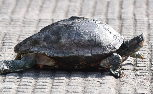 Woman Seen Jabbing At Sea Turtle Nest With Wooden Stake Lands In Jail